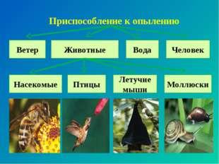 Приспособление к опылению Ветер Животные Вода Птицы Летучие мыши Человек Насе