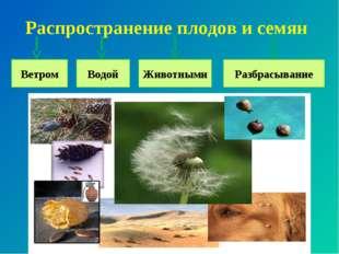 Распространение плодов и семян Ветром Водой Животными Разбрасывание
