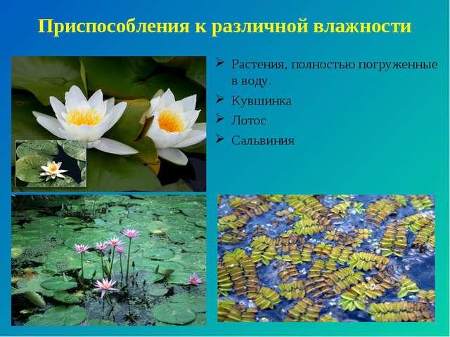 Приспособления к различной влажности Растения, полностью погруженные в воду....