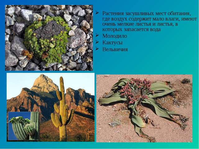 Растения засушливых мест обитания, где воздух содержит мало влаги, имеют очен...