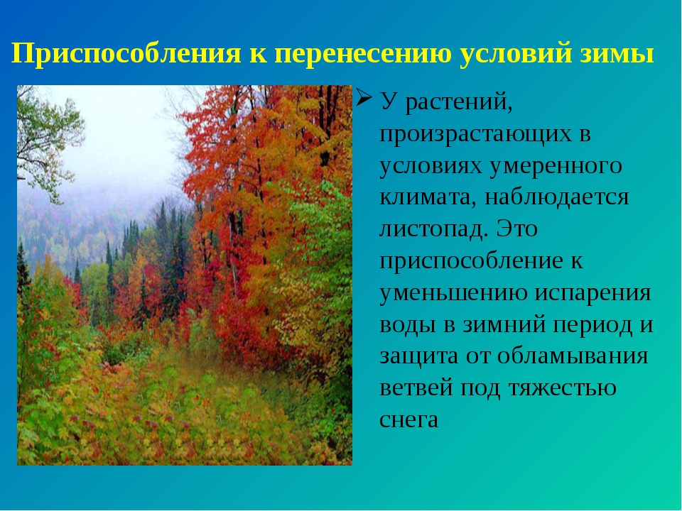 Приспособления к перенесению условий зимы У растений, произрастающих в услови...