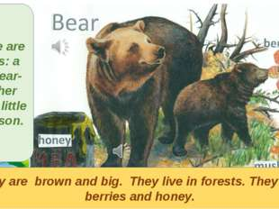 They are brown and big. They live in forests. They eat berries and honey. The