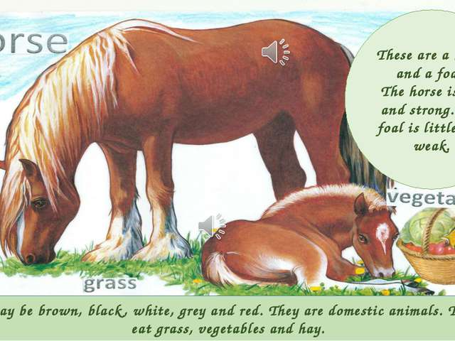 Horses may be brown, black, white, grey and red. They are domestic animals. T...