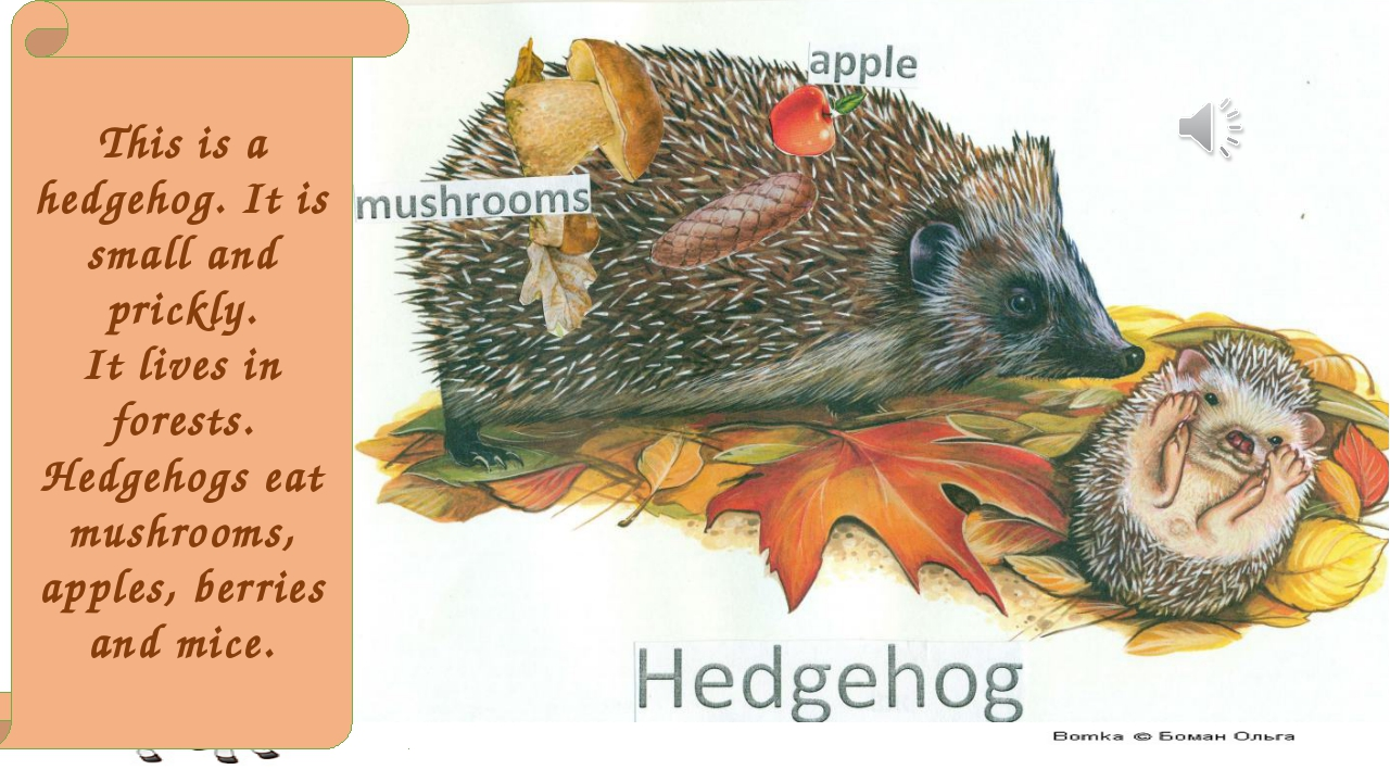 This is a hedgehog. It is small and prickly. It lives in forests. Hedgehogs e...