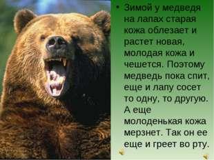 Зимой у медведя на лапах старая кожа облезает и растет новая, молодая кожа и