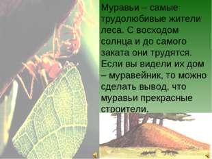 Муравьи – самые трудолюбивые жители леса. С восходом солнца и до самого закат