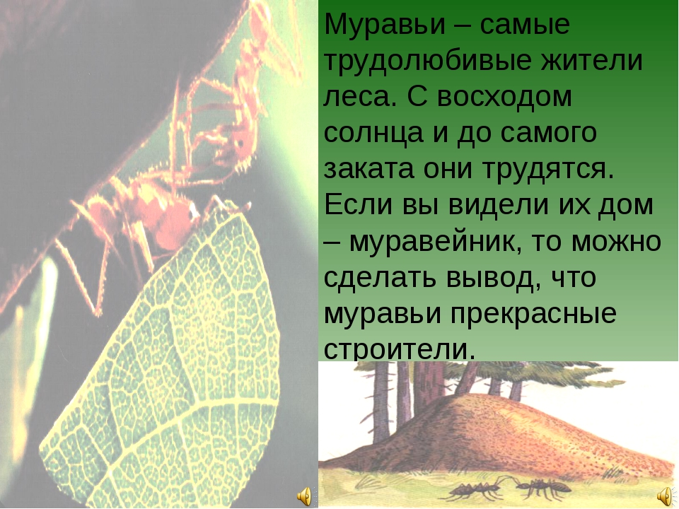 Муравьи – самые трудолюбивые жители леса. С восходом солнца и до самого закат...