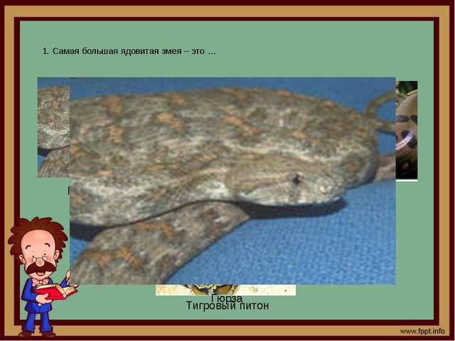 1. Самая большая ядовитая змея – это … Гюрза Анаконда Тигровый питон Гюрза