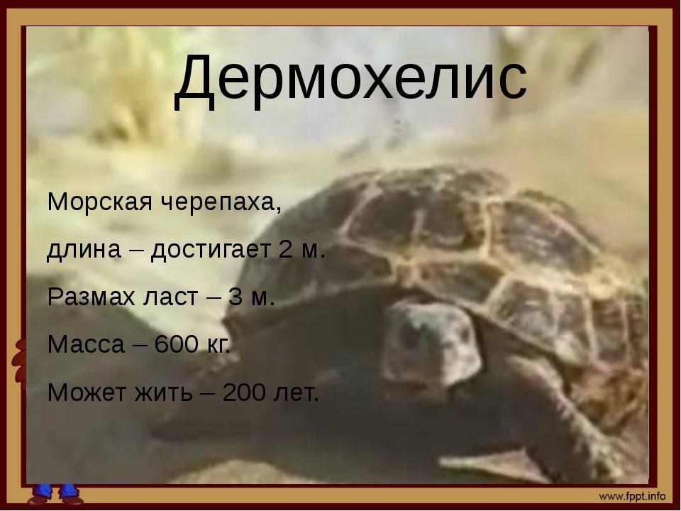 Дермохелис Морская черепаха, длина – достигает 2 м. Размах ласт – 3 м. Масса...