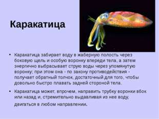 Каракатица Каракатица забирает воду в жаберную полость через боковую щель и о