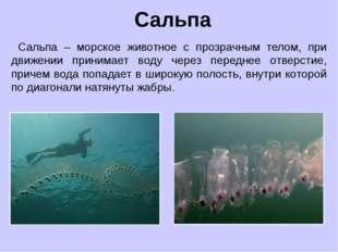 Сальпа – морское животное с прозрачным телом, при движении принимает воду че