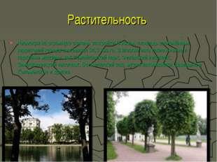 Растительность Несмотря на огромную степень застройки Москвы, площадь озеленё