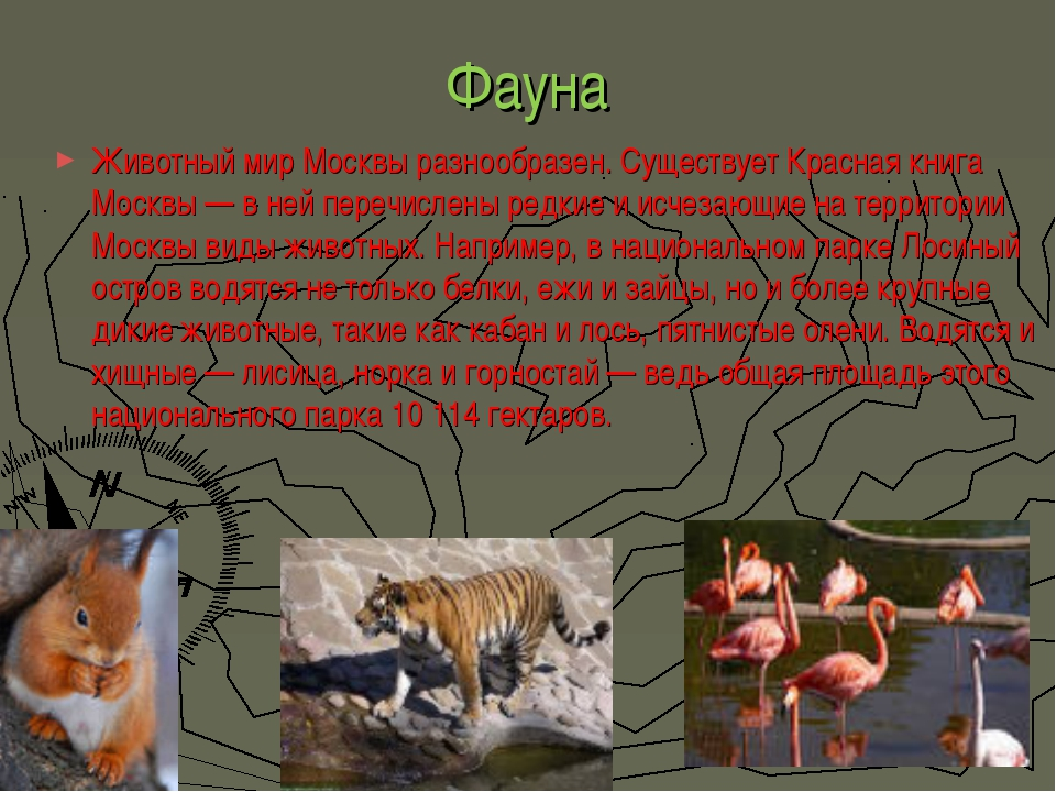 Фауна Животный мир Москвы разнообразен. Существует Красная книга Москвы— в н...