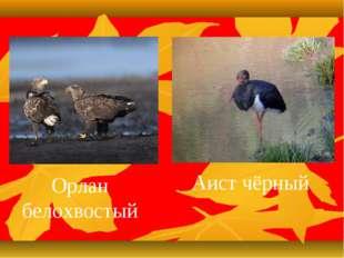 Орлан белохвостый Аист чёрный