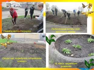 Сажаем многолетники Подготовка почвы под газонную траву Скоро нас порадуют «А
