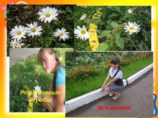 Ромашковые клумбы Все цветет