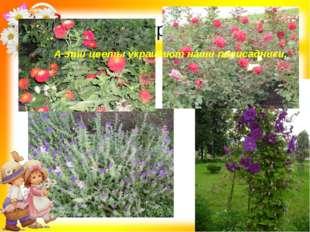 А эти цветы украшают наши А эти цветы украшают наши палисадники.