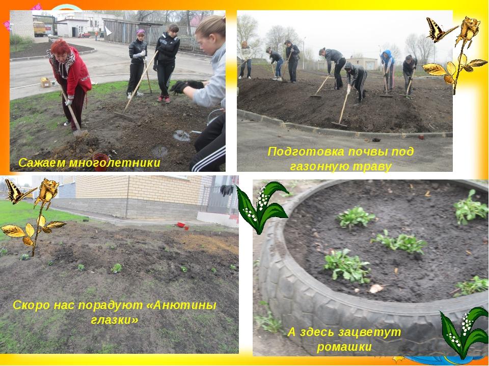 Сажаем многолетники Подготовка почвы под газонную траву Скоро нас порадуют «А...