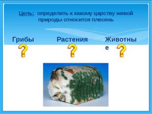 Грибы Растения Животные Цель: определить к какому царству живой природы отно