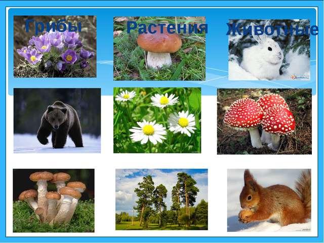 Грибы Растения Животные