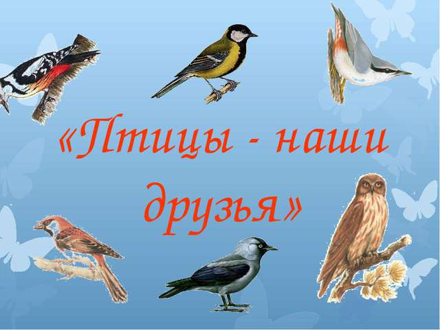 «Птицы - наши друзья»