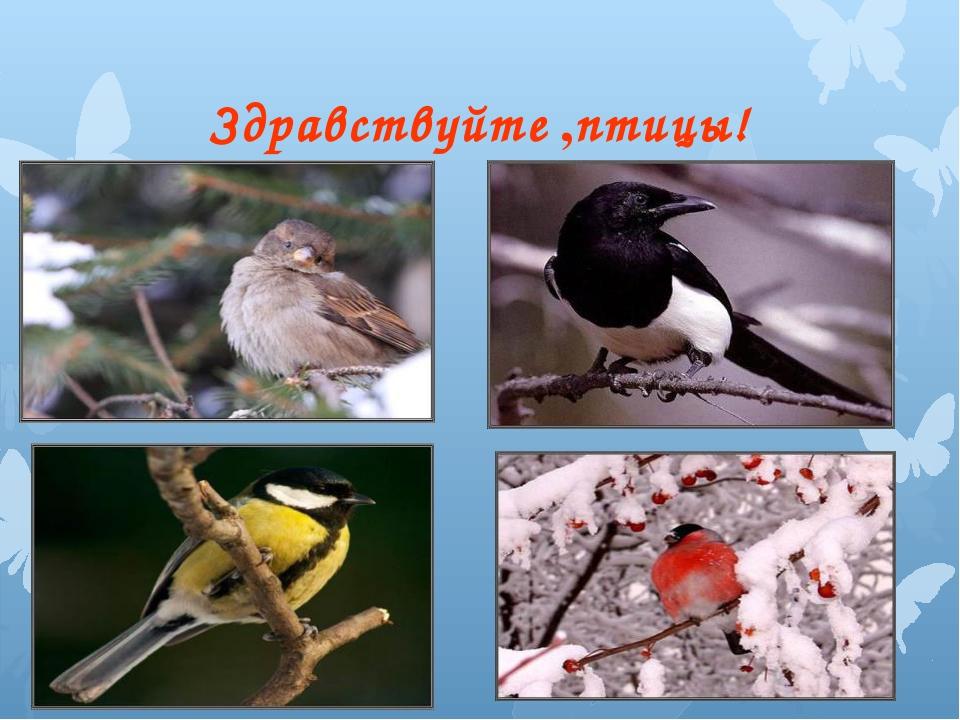 Здравствуйте ,птицы!