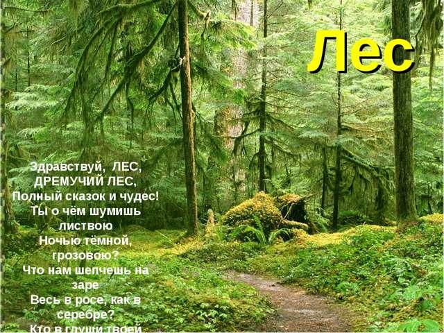 Лес Здравствуй,ЛЕС, ДРЕМУЧИЙ ЛЕС, Полный сказок и чудес! Ты о чём шумишь ли...