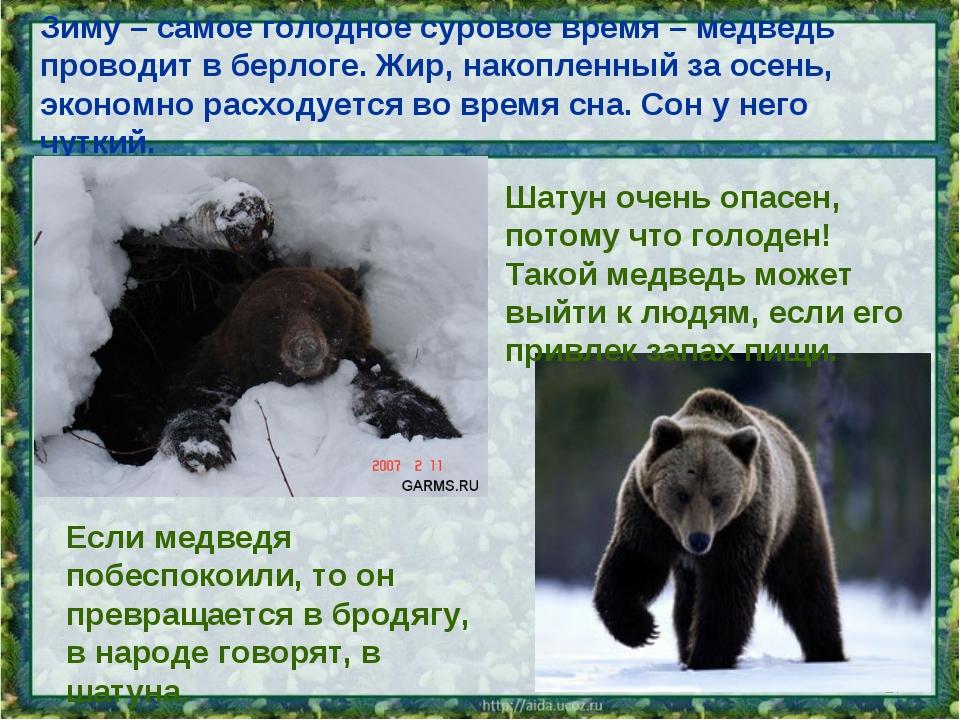 Зиму – самое голодное суровое время – медведь проводит в берлоге. Жир, накопл...
