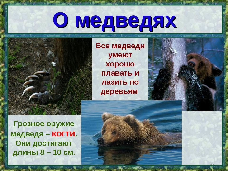 * Грозное оружие медведя – когти. Они достигают длины 8 – 10 см. О медведях В...