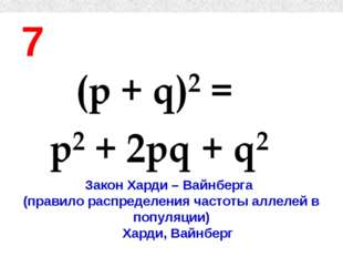 7 Закон Харди – Вайнберга (правило распределения частоты аллелей в популяции)