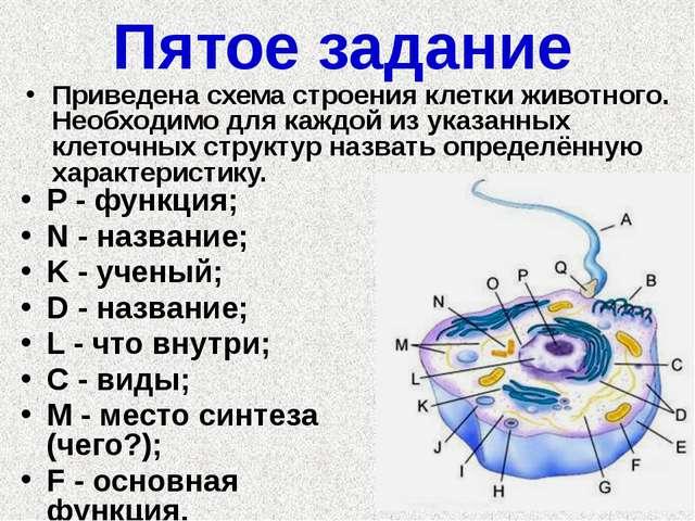 Пятое задание P - функция; N - название; K - ученый; D - название; L - что вн...