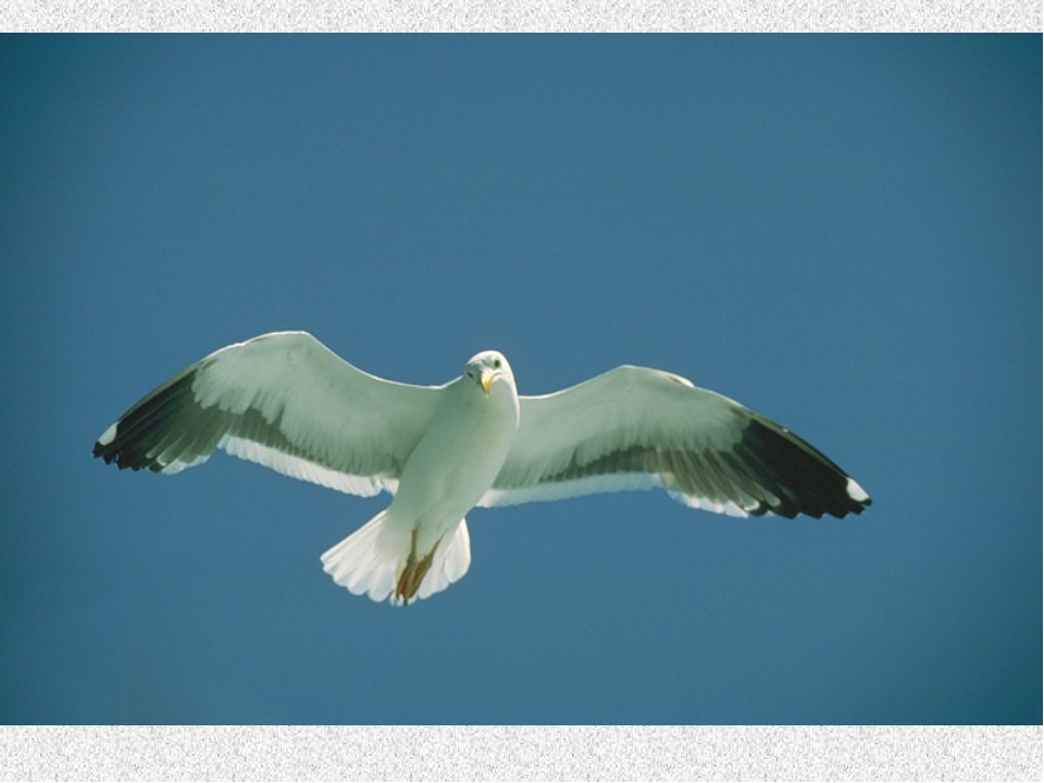 Птица из свиты афины