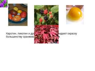 Каротин, ликопин и другие каротиноиды придают окраску большинству оранжевых