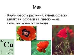 Мак Карликовость растений, смена окраски цветков с розовой на синюю — на боль