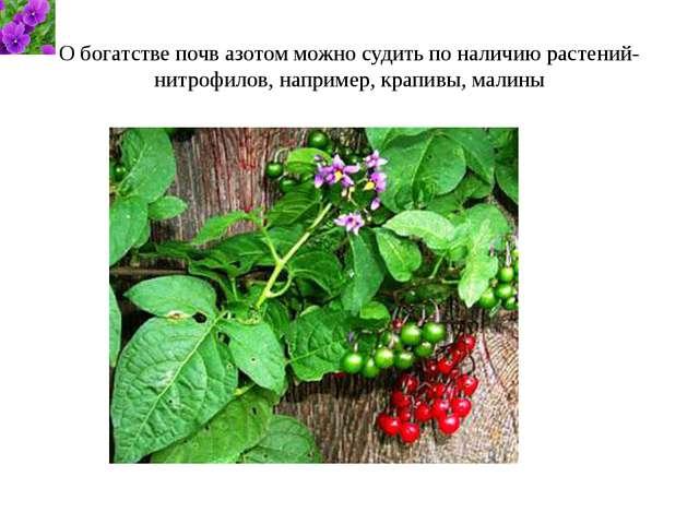 О богатстве почв азотом можно судить по наличию растений-нитрофилов, например...