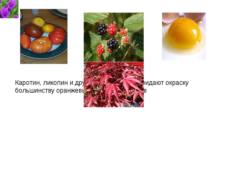 Каротин, ликопин и другие каротиноиды придают окраску большинству оранжевых...