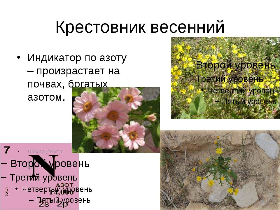 Крестовник весенний Индикатор по азоту – произрастает на почвах, богатых азот...