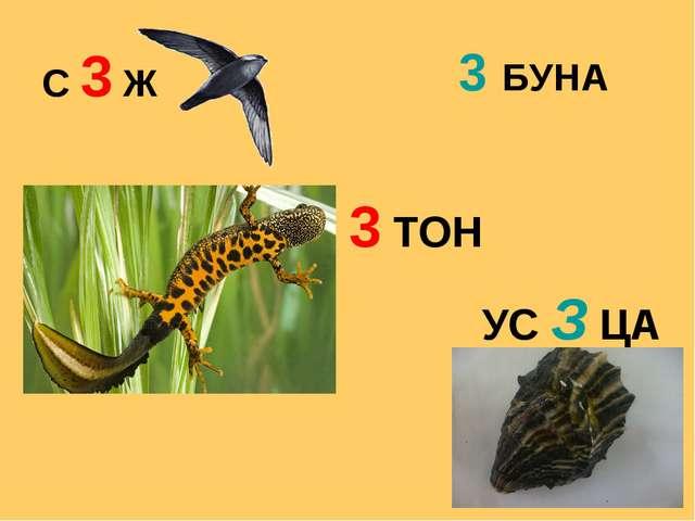 С 3 Ж УС З ЦА 3 ТОН 3 БУНА