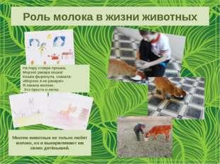 Роль молока в жизни животных На пору стояра прошка, Мороко ракара кошка! Кошк