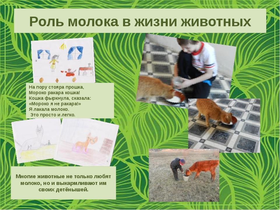 Роль молока в жизни животных На пору стояра прошка, Мороко ракара кошка! Кошк...