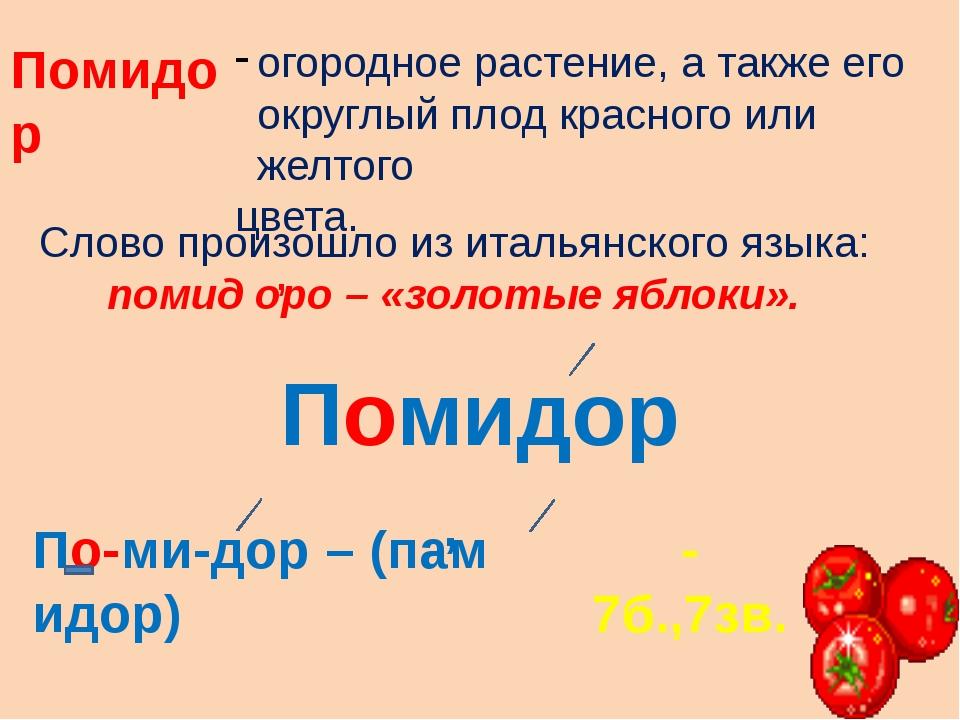 Помидор огородное растение, а также его округлый плод красного или желтого цв...