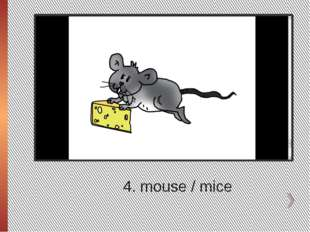 4. mouse / mice