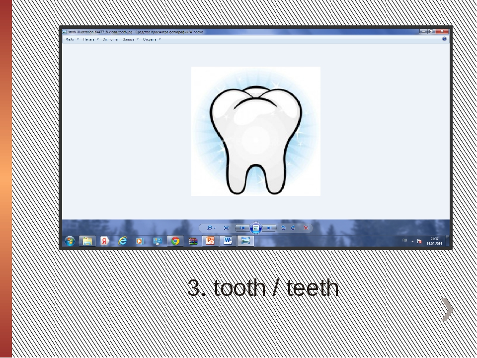3. tooth / teeth