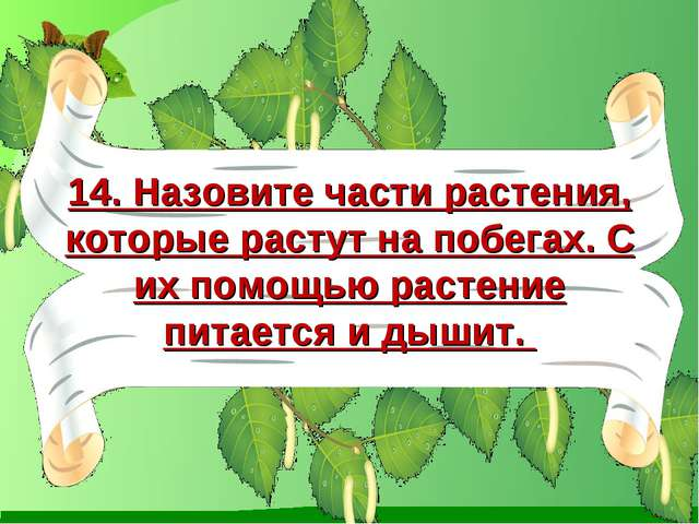 14. Назовите части растения, которые растут на побегах. С их помощью растение...