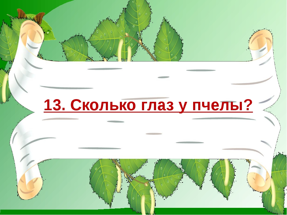 13. Сколько глаз у пчелы?
