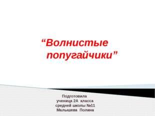 """""""Волнистые попугайчики"""" Подготовила ученица 2А класса средней школы №11 Малы"""