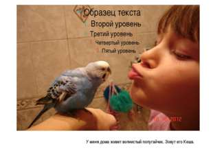 У меня дома живет волнистый попугайчик. Зовут его Кеша.