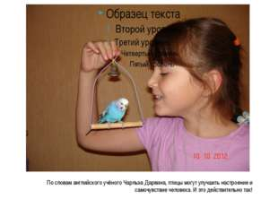 По словам английского учёного Чарльза Дарвина, птицы могут улучшить настроени