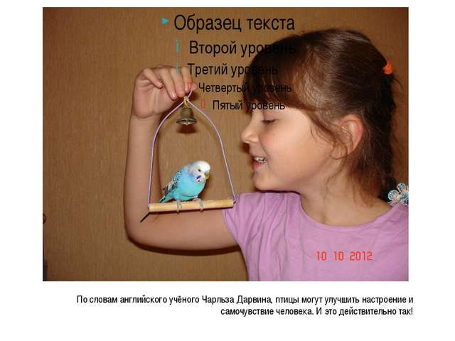 По словам английского учёного Чарльза Дарвина, птицы могут улучшить настроени...