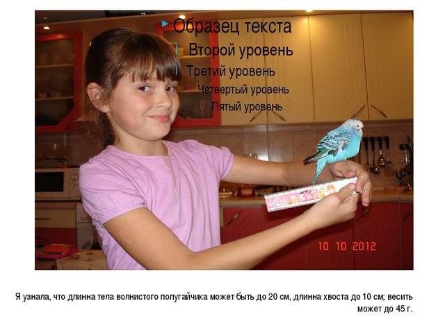 Я узнала, что длинна тела волнистого попугайчика может быть до 20 см, длинна...